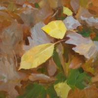 Carpet of fall